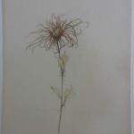 (227) Flower